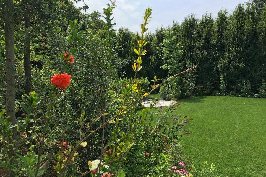 progettazione e manutenzione aree verdi